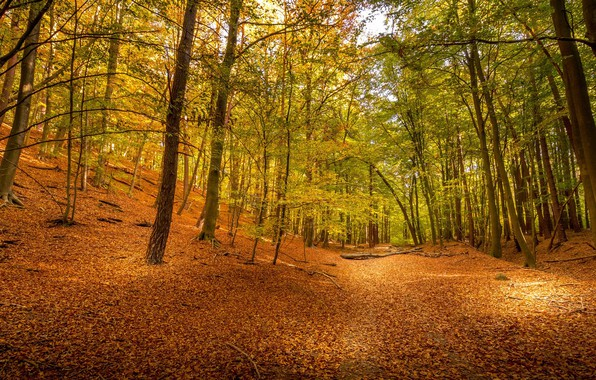 Picture autumn, forest, trees, foliage