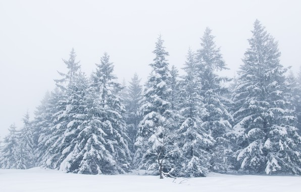 Picture winter, snow, trees, landscape, winter, tree, landscape, beautiful, winter, snow, fir tree