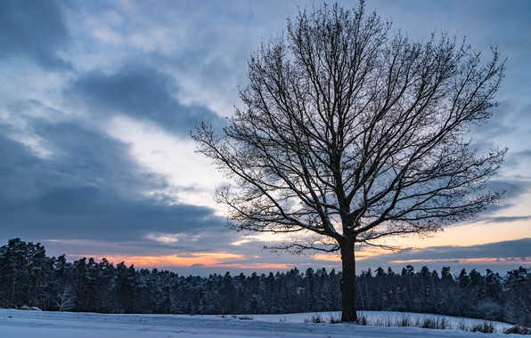 Picture winter, field, forest, the sky, clouds, snow, sunset, tree, the evening, twilight