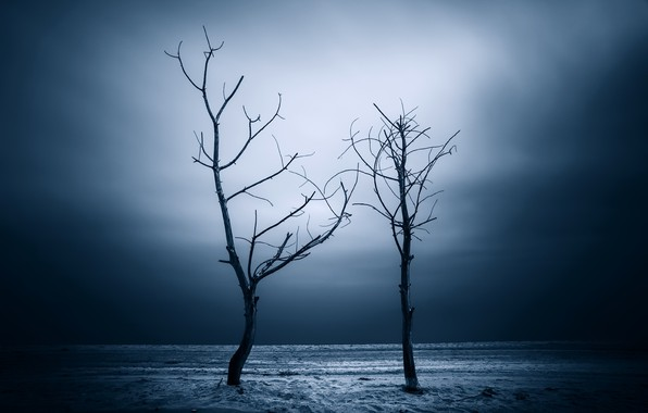 Picture trees, night, nature