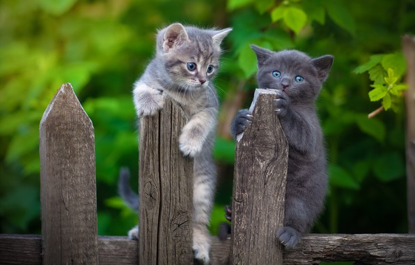 Picture the fence, kittens, kids, a couple, two kittens