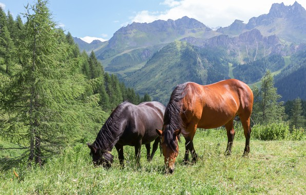 Picture forest, summer, grass, mountains, nature, two, horses, horse, pair, two, grazing, two knights