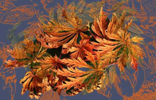 Picture autumn, abstraction, rendering, background, collage, Wallpaper, fractal, picture, autumn leaves, screensaver on your desktop