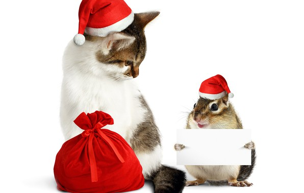 Picture cat, protein, New year, bag, cap