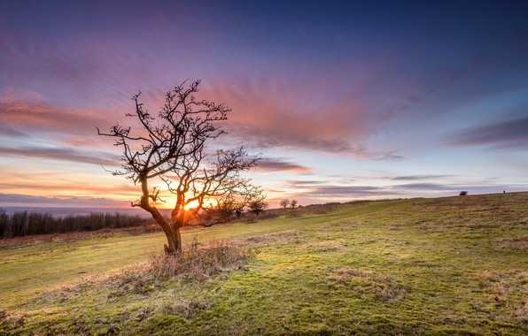 Picture field, summer, sunset, tree