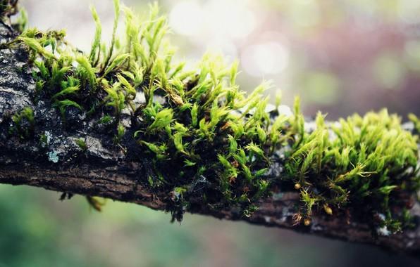 Picture Plant, Moss, macro
