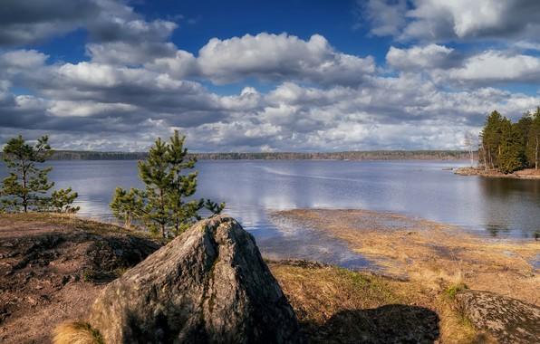 Picture lake, shore, stone, pine