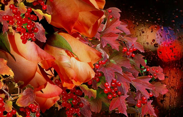Picture autumn, rain, bouquet, Roses, Kalina