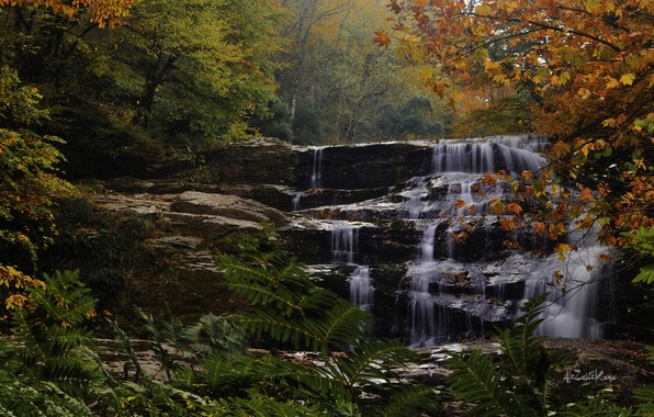 Picture autumn, forest, trees, river, waterfall