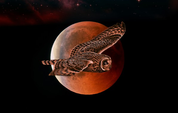 Picture flight, night, owl, the moon