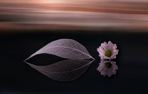 Picture flower, sheet, background, Daisy