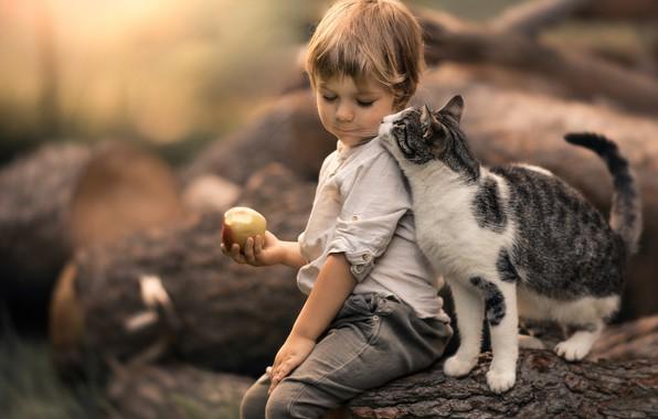 Picture cat, cat, Apple, boy, friendship, friends, bokeh