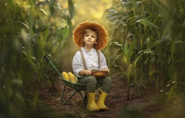 Picture nature, thickets, boy, corn, car, child, Jansone Dace
