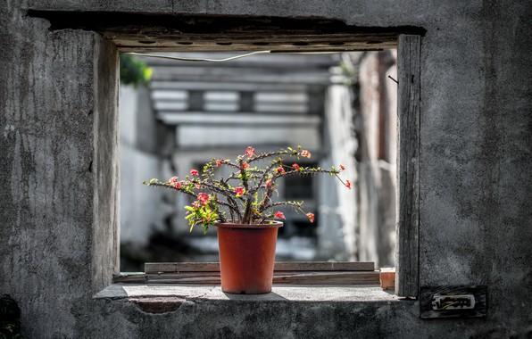 Picture cactus, window, pot, naturalism