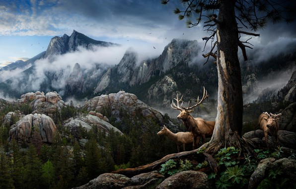 Picture clouds, mountains, collage, deer, horns