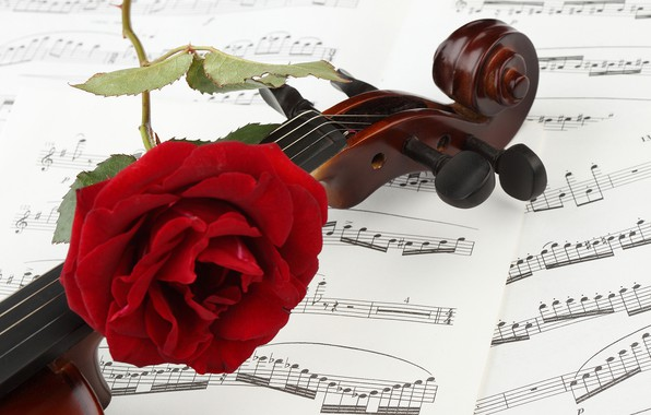 Photo Wallpaper Flower Close Up Notes Violin Rose Red