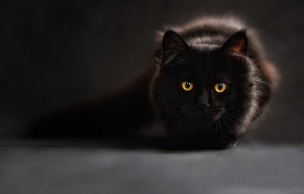 Picture animals, cat, look, Cat, wool