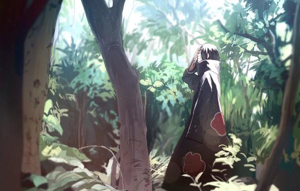 Picture forest, naruto, nature, art, tree, akatsuki, sharingan, Uchiha Itachi, by Ns7104