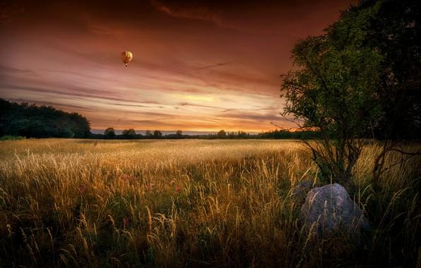 Photo wallpaper field, summer, sunset, ball
