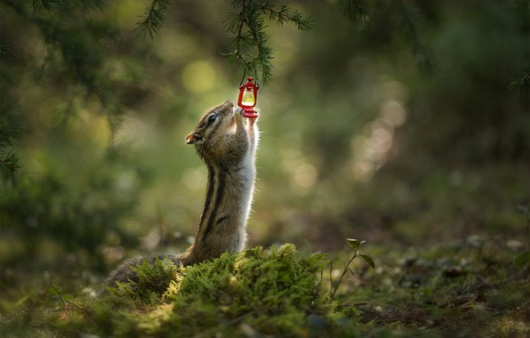 Picture branches, glare, moss, flashlight, Chipmunk, bokeh, rodent