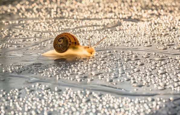 Picture water, drops, macro, surface, light, droplets, glare, moisture, snail, silver, light background, crawling, horns, water …