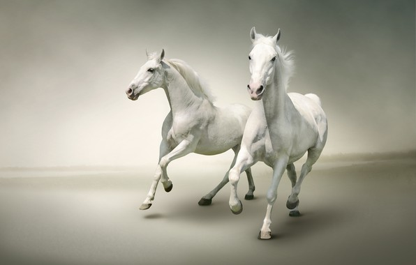 Picture two, horses, horse, pair, white, Duo, light background, two, muzzle, gallop, hooves, horses, jump, handsome, ...