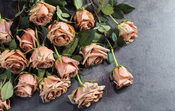 Picture grey, background, pink, roses, bouquet