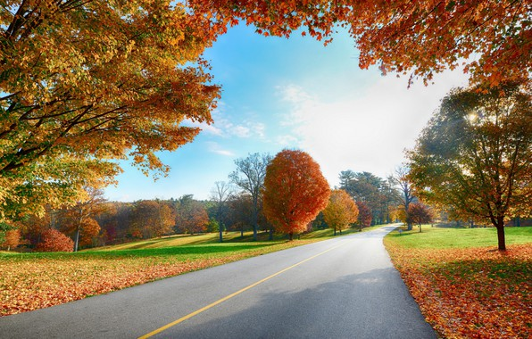 Picture falling leaves, Sunny day, autumn trees, asphalt road