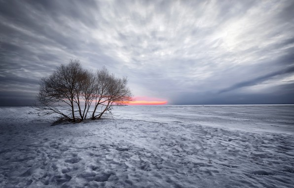 Picture the sky, snow, trees
