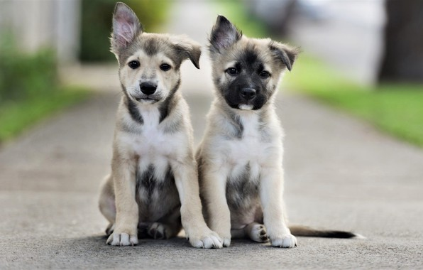 Picture road, dogs, look, puppies, road, faces, sitting, dogs, look, faces, sitting, puppies