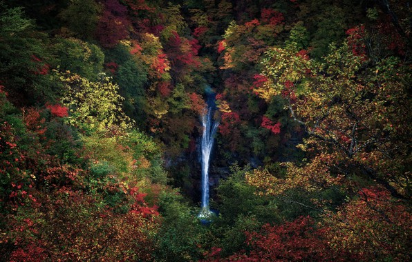 Picture autumn, forest, trees, branches, nature, foliage, waterfall, Japan