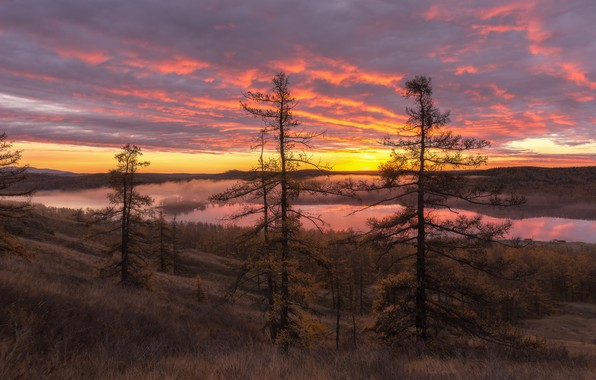 Picture forest, the sun, trees, sunset, branches, fog, river, mountain, valley, slope