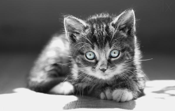 Picture eyes, mustache, kitty, kitten, eyes, mustache, Anna Zuidema