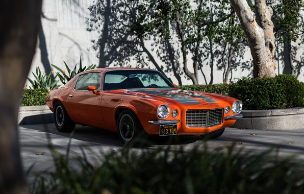 Picture Chevrolet, Camaro, 1970, Z28/RS