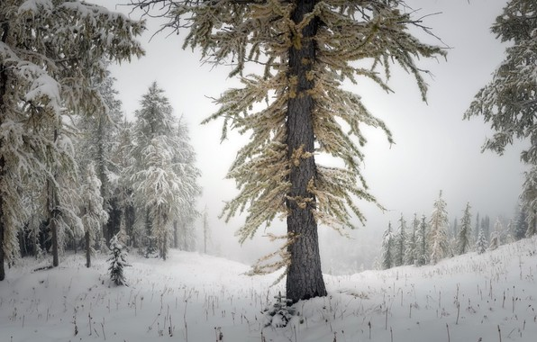 Picture winter, forest, nature, fog