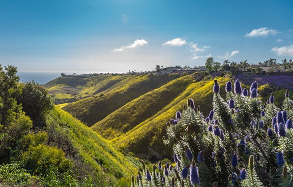 Picture sea, the sky, grass, the sun, clouds, trees, flowers, mountains, hills, coast, horizon, CA, houses, …
