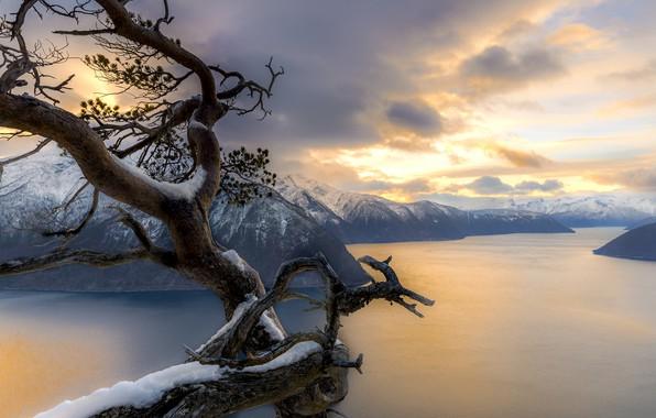 Picture winter, snow, landscape, mountains, nature, tree, Norway, Bay, the fjord, Jorn Allan Pedersen