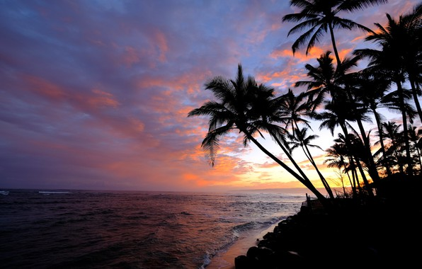 Picture the sky, palm trees, the ocean, dawn, morning, Hawaii, Pacific Ocean, Hawaii, The Pacific ocean, …