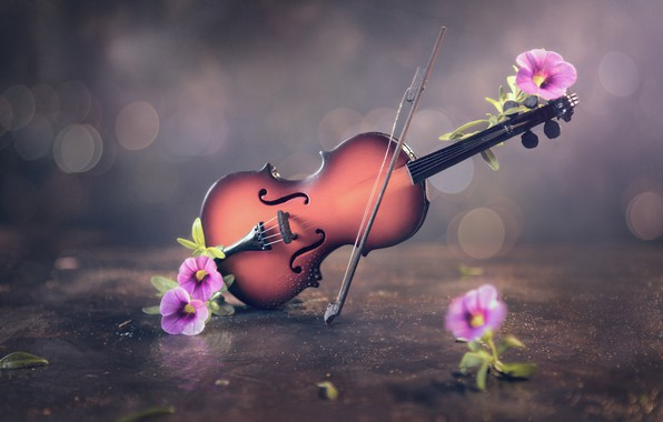 Picture flowers, violin, bow