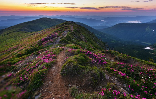 Picture flowers, hills, the evening