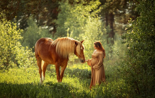 Picture forest, summer, light, mood, horse, woman, horse, belly, pregnant, pregnancy