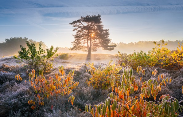 Picture autumn, grass, the sun, light, nature, tree, foliage, morning, frost, the bushes, frost