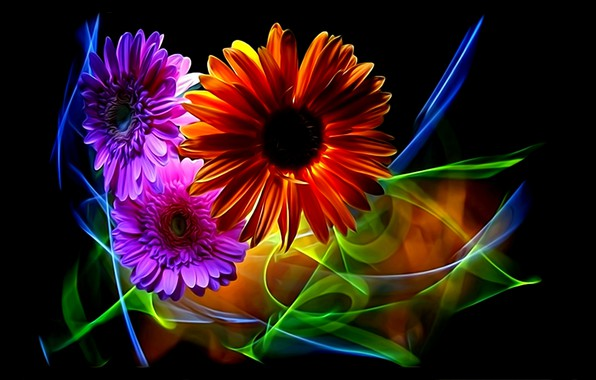 Picture flowers, abstraction, rendering, petals, black background, gerbera, picture, neon light, floral fantasy, lines of light