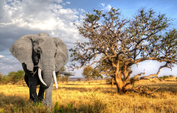Picture the sun, nature, tree, elephant