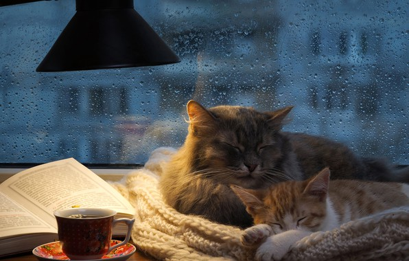 Picture autumn, cat, cat, glass, drops, cats, comfort, house, kitty, heat, grey, room, rain, stay, tea, …