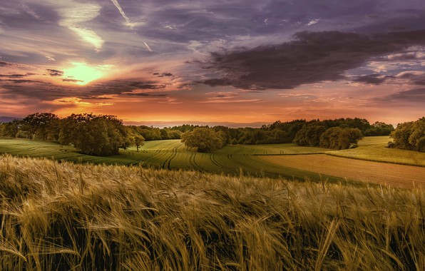 Picture field, autumn, forest, summer, the sky, the sun, clouds, trees, landscape, sunset, clouds, nature, field, …