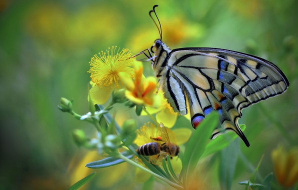 Picture greens, flower, macro, insects, bee, butterfly