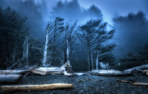 Picture forest, Beach, Dusk, Washington State, Rialto, deadwood