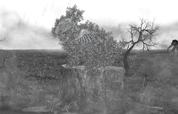 Picture fog, rabbit, Rain, stump, werewolf, black and white