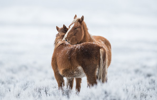 Picture cold, winter, horses